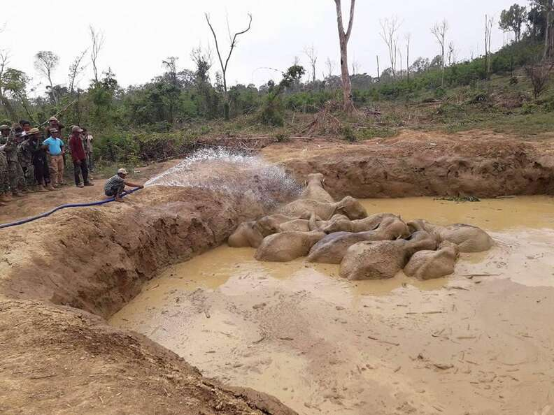 Rescuers hose down elephant herd stuck in bomb crater in Cambodia