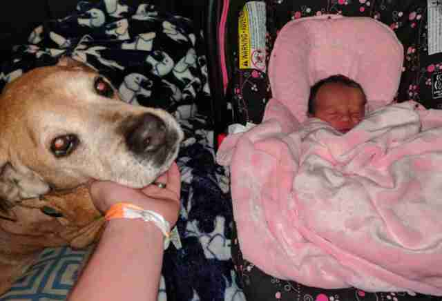 Senior shelter dog meets his new baby sister before passing away