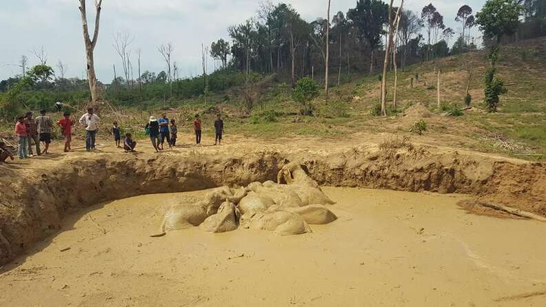 Rescuers dig ramps for elephant herd stuck in bomb crater in Cambodia