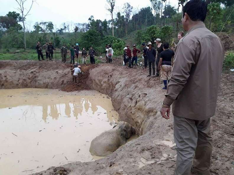 Baby elephant stuck in bomb crater in Cambodia