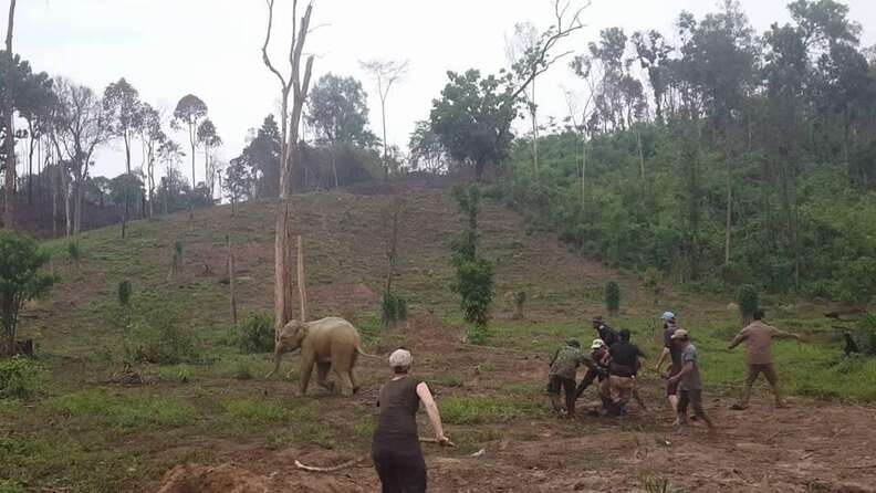 Baby elephant escapes bomb crater in Cambodia