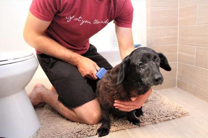 Senior rescue dog getting brushed