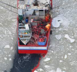A Canadian sealing vessel with dead seal bodies on board
