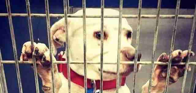Fort Worth shelter dog needs forever home