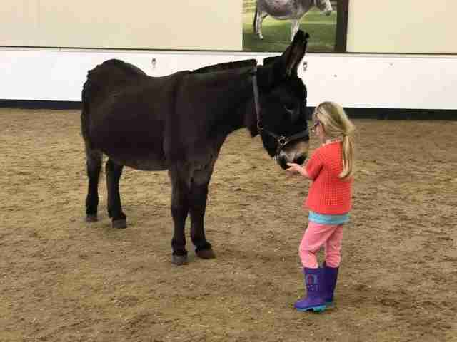Girl meeting her therapy donkey at The Donkey Sanctuary in Birmingham