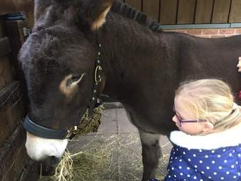 Girl greeting her therapy donkey at The Donkey Sanctuary in Birmingham