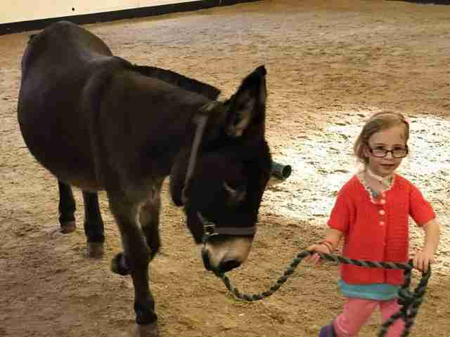 Girl leading her therapy donkey