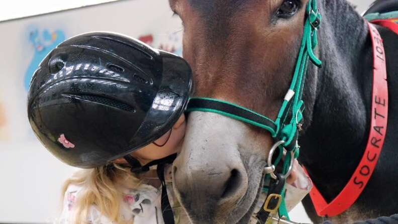 Girl kissing her therapy donkey