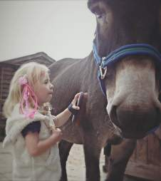Girl grooming her therapy donkey