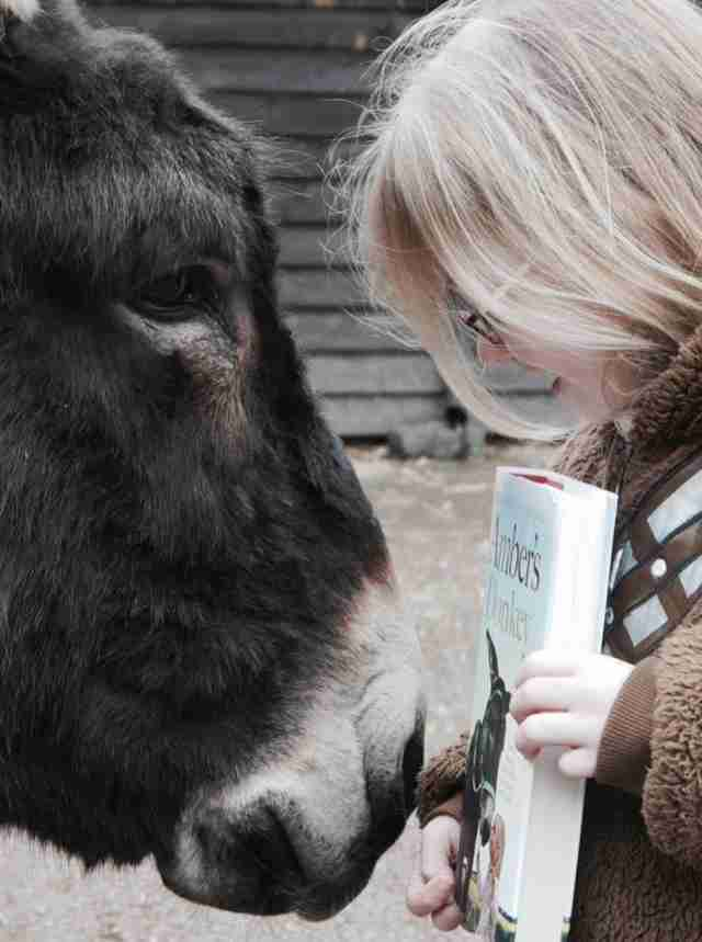 Therapy donkey and his favorite girl