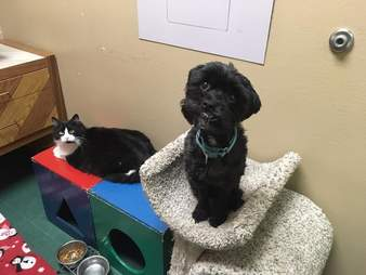 A cat and dog who are best friends