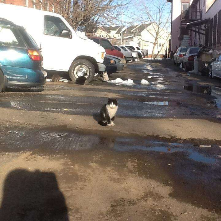 Street cats in Hartford, CT