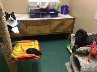 Dog, cat and rat who are best friends
