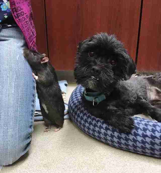 A dog and rat who are best friends