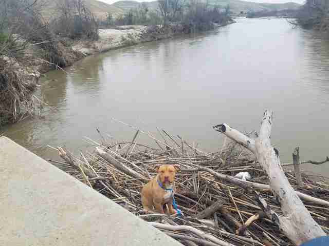 lost dog gets stuck in middle of river