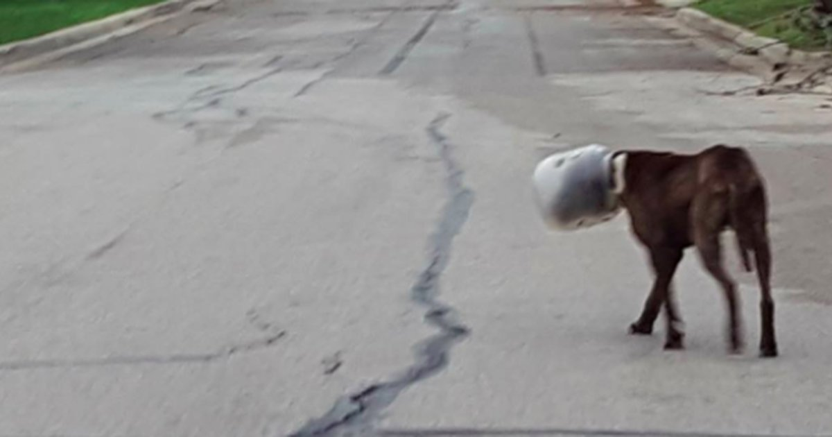 Dog Spends 3 Days With His Head Stuck In Plastic Jar - The Dodo