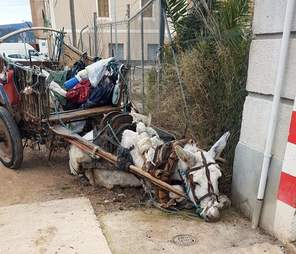 Donkey collapsed in Spain