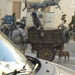 Neglected donkey pulling cart through Spanish village