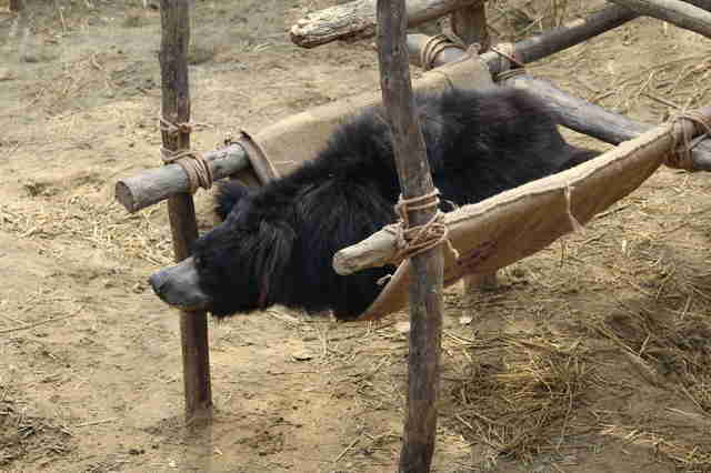 Former dancing bear rescued in India