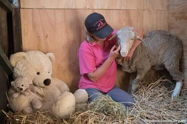 Lambert the lamb with Pam Ahern, founder of Edgar's Mission sanctuary