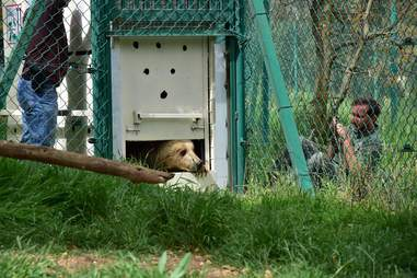 Bear from war-torn Mosul, Iraq, zoo arriving at Jordon rescue center