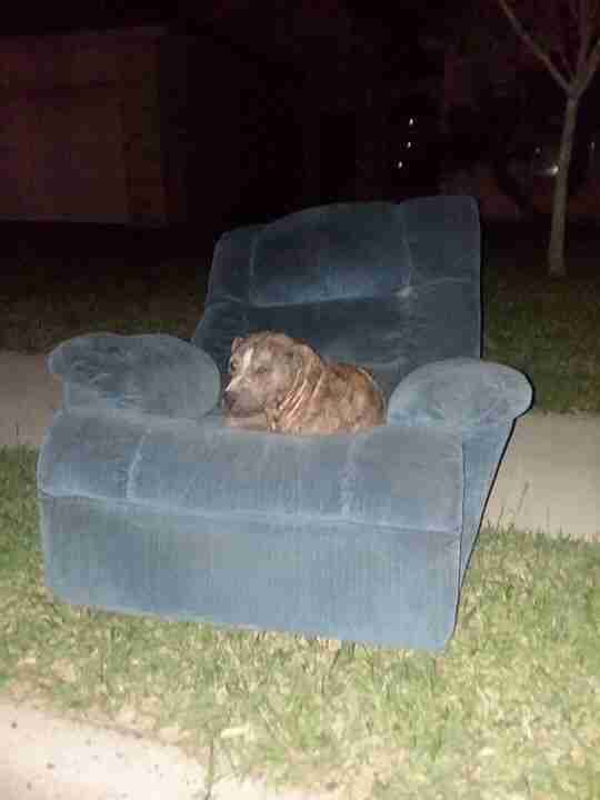 Bait dog who lived on armchair for days before being rescued
