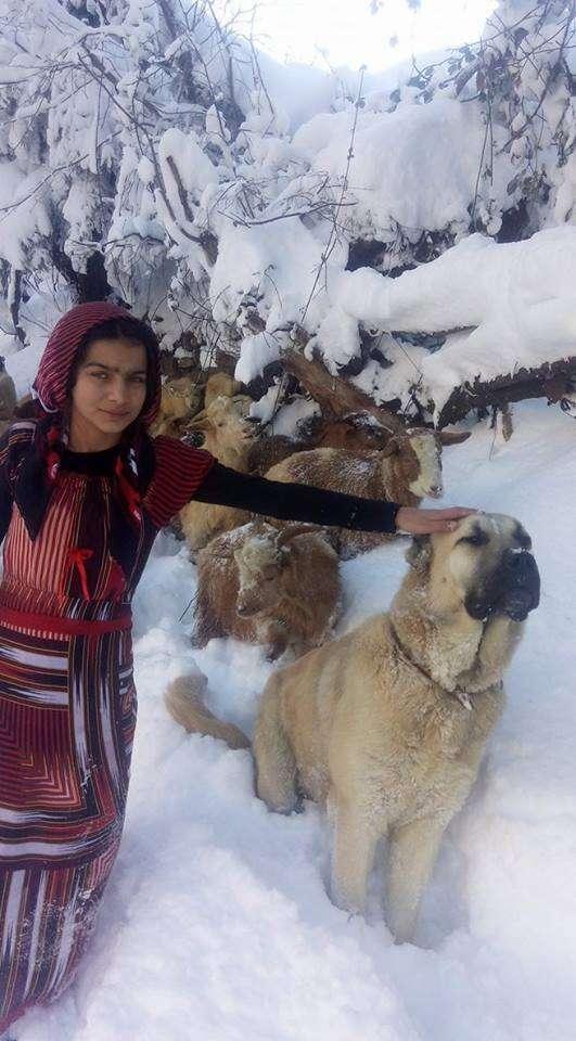 turkish girl with dog and goats
