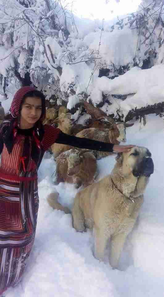 turkish girl with dog and goats