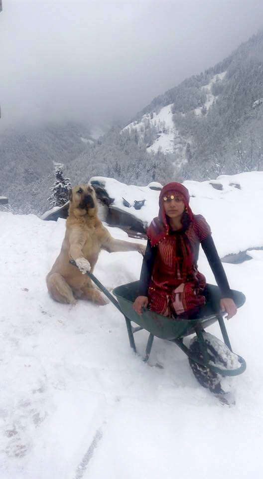 girl poses in wheelbarrow with dog