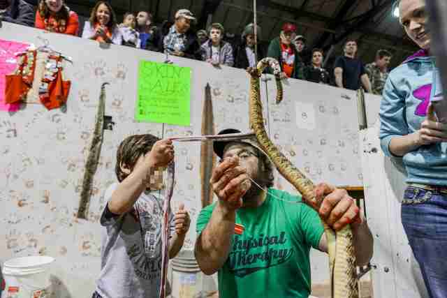 A man and child skinning a rattlesnake at the Sweetwater snake roundup festival