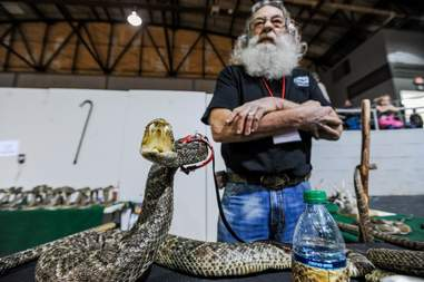A dead rattlesnake at the Sweetwater snake roundup festival