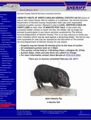 A potbellied pig up for auction at a county animal shelter