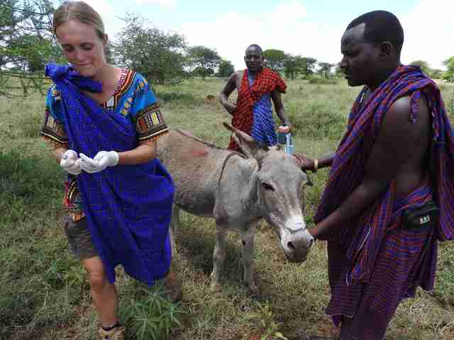 Chloe Breakwell administering medicine to one of her animal patients