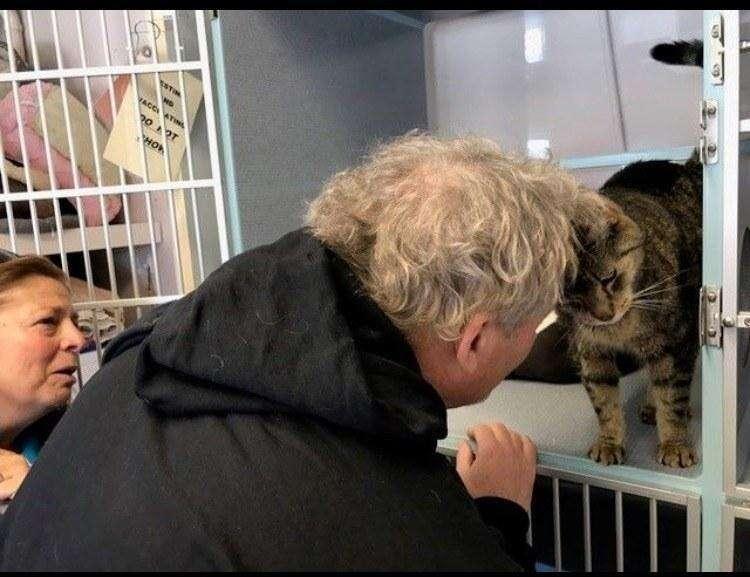 how to adopt a pet