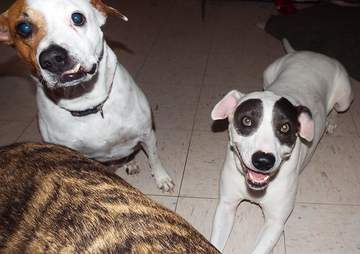 Rescue dogs looking for a new home