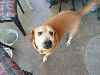Rescue dog looking for a new home