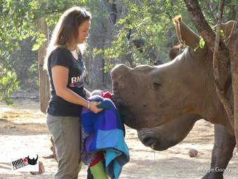 A rhino orphan getting a blanket at an orphanage in South Africa