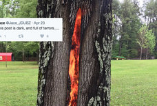 This Burning Tree United the Internet When Nothing Else Could