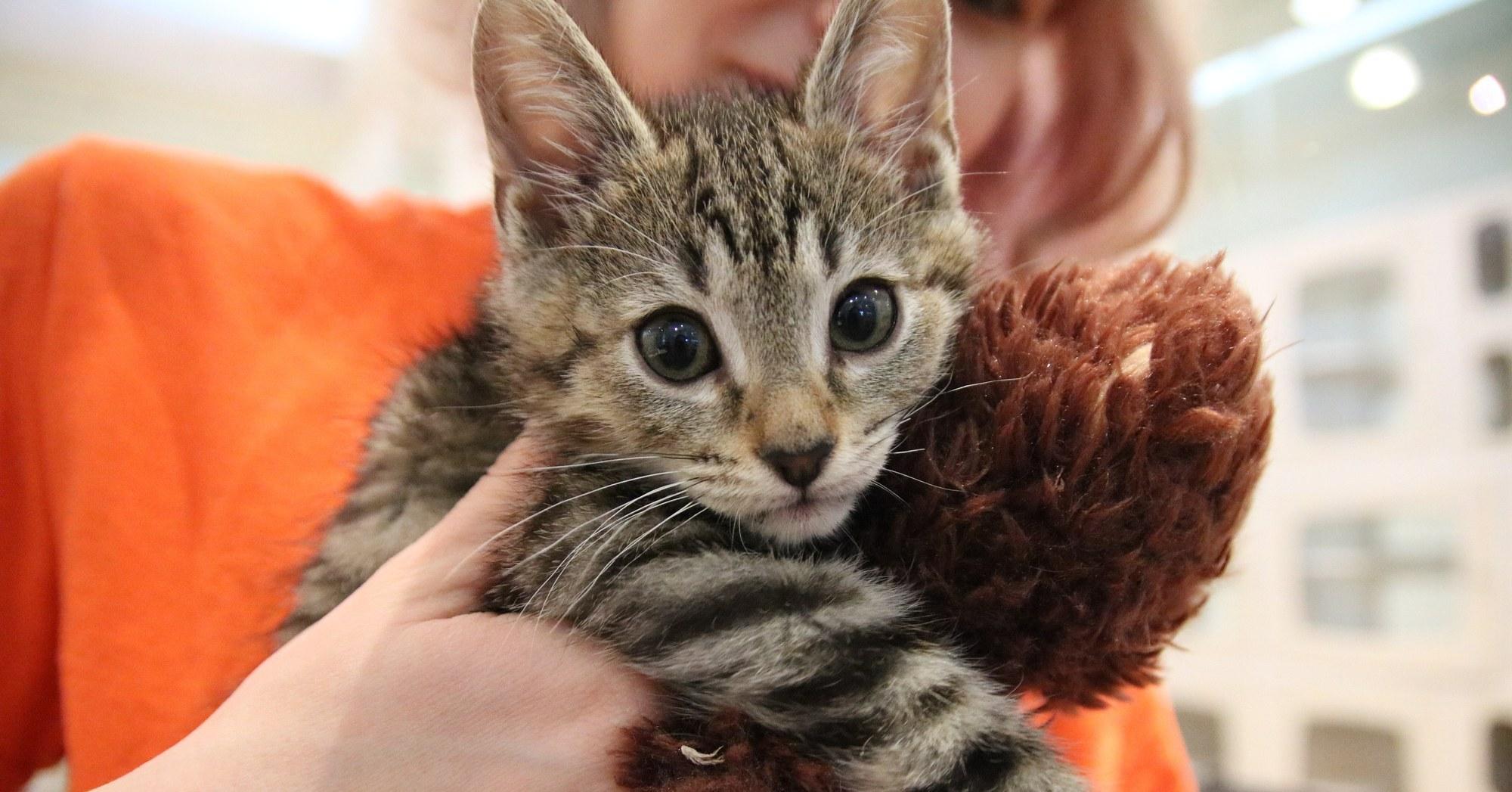Carolina: Kittens Indianapolis Craigslist