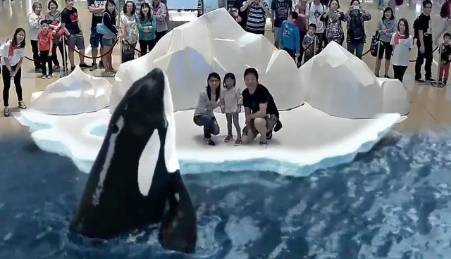 fd3b407d96e This New Type Of Orca Show Could Make SeaWorld Obsolete - The Dodo