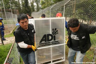 Animal Defenders International team transporting an animal