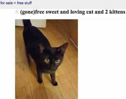 best date scammed on craigslist pets