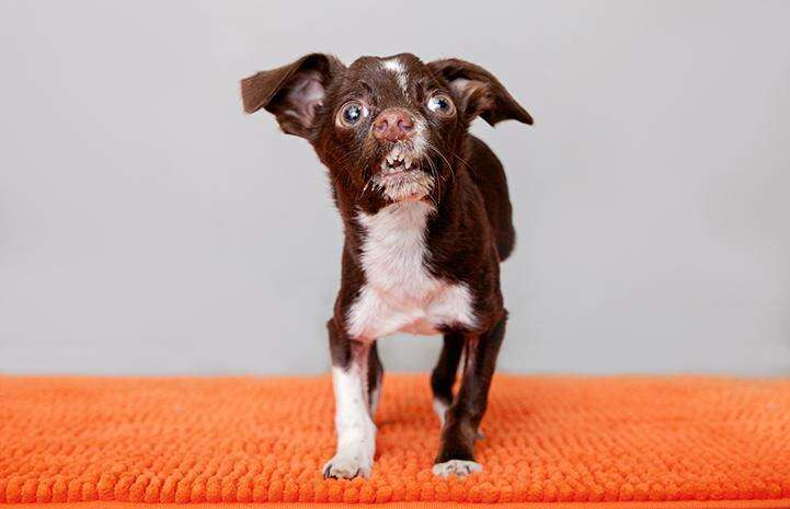 Cletus the dog at Best Friends Animal Society