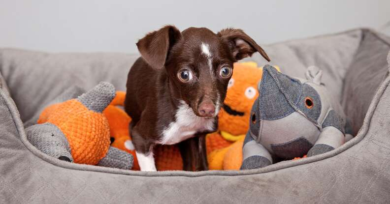 Cletus the dog with his toys
