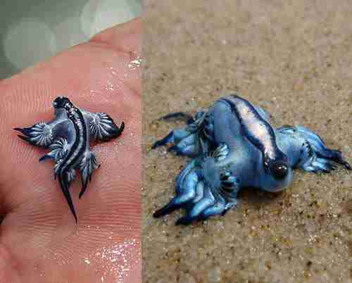 Tiny Real Life Dragon Makes A Stunning Rare Appearance The Dodo