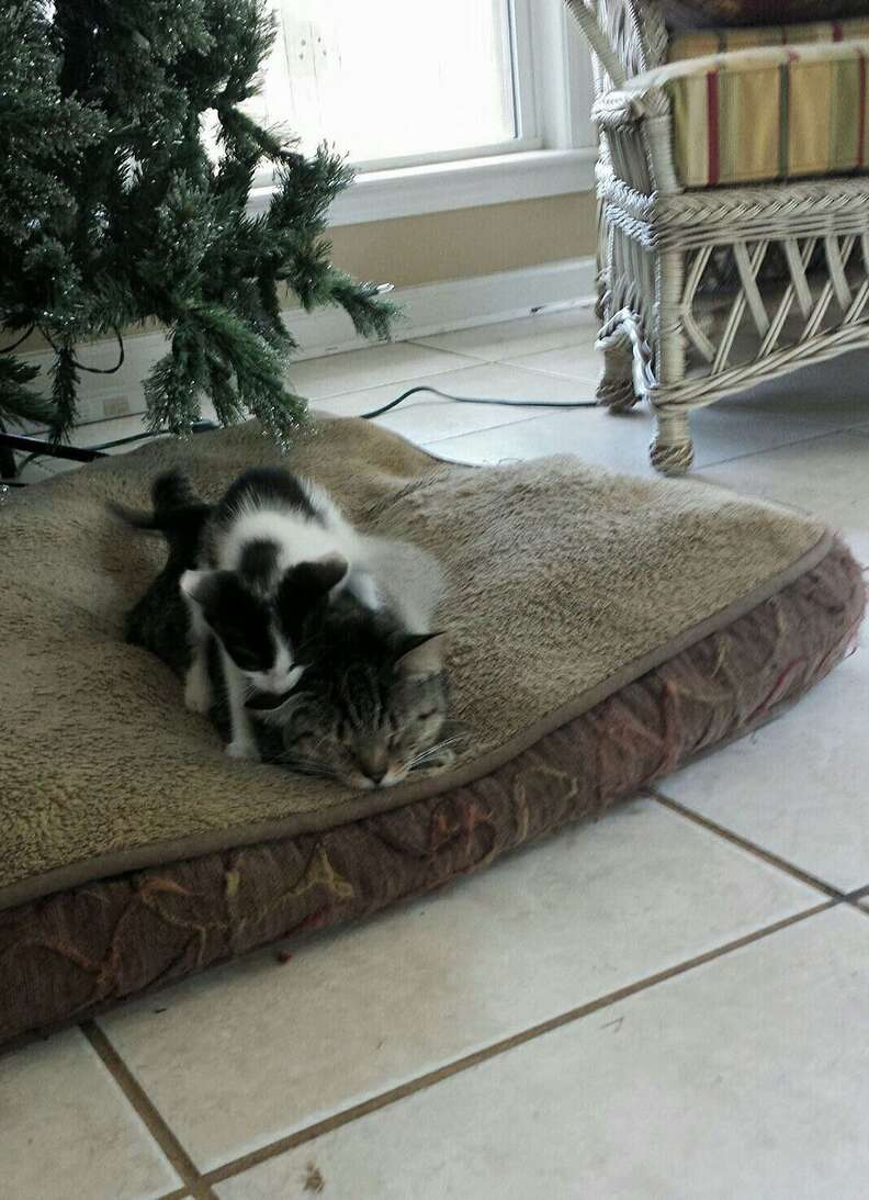 cat finds a kitten