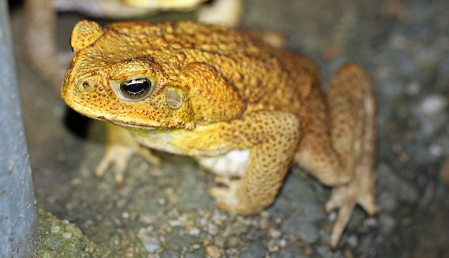 10 Disastrous Consequences Of Humans Importing Invasive Species