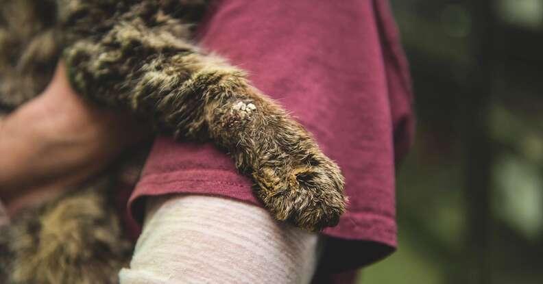 Cat with mange gets hugs
