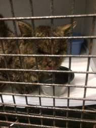 Cat with mange in cage