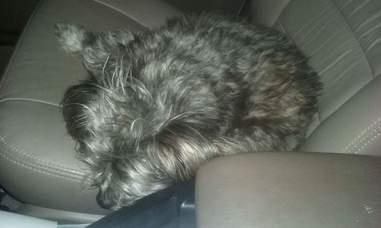 Rescued dog in a car